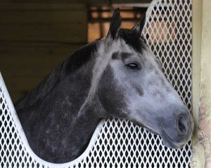 Frosted The Whitney 2016