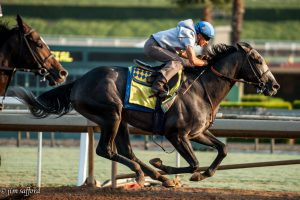 Arrogate Works for Breeders' Cup