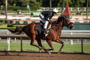 Masochistic works for the Breeders' Cup Sprint at Santa Anita Park 10/21/16. Photo: Jim Safford