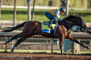 Mastery and Mike Smith work at Santa Anita 11/30/16.
