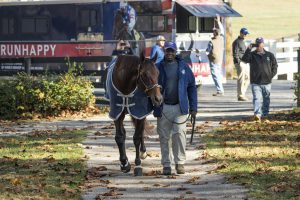 Runhappy arrives at Claiborne Farm. Photo: Claiborne Farm
