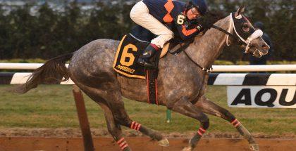 El Areeb Wins the Jerome  Stakes (GIII) At Aqueduct on Jan 2, 2017. Photo: NYRA