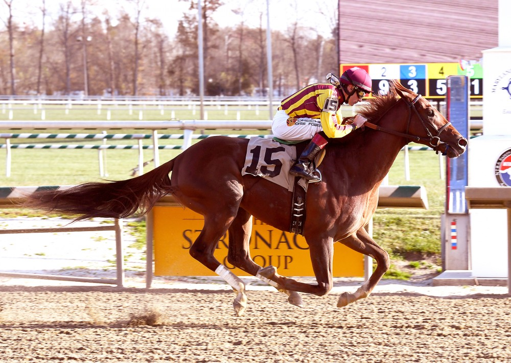 Irish War Cry Bred For Derby Glory Lady And The Track