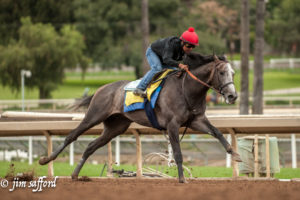 Arrogate, with Martin Garcia aboard, works a mile in 1:38 2/5 at Santa Anita Park, 2-27-17. Photo: Jim Safford