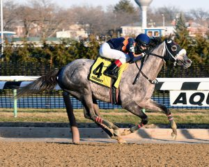 El Areeb wins the 2017 Withers Stakes (GIII) at Aqueduct. Photo: Chelsea Durand/NYRA