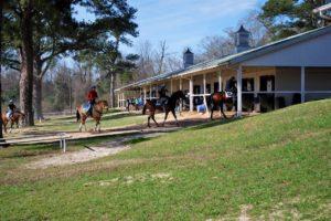 Horses train at Camden Training Center, February 2017. Photo: Photo: Sue Daragan