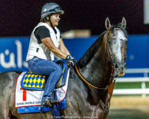 Arrogate and Dana Barnes in Dubai. 3/24/17. Photo: Jesse Caris