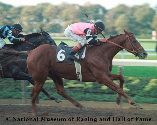 Stallion Stories Affirmed Lady And The Track