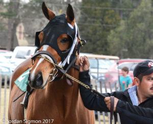 horsefaceAiken