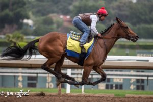 Grade 1 winner Abel Tasman works at Santa Anita under Martin Garcia, April 2017. Photo: Jim Safford