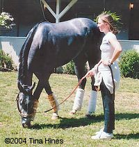 Trainer Kristin Mulhall and 2004 Kentucky Derby runner-up Imperialism. Photo: Tina Hines