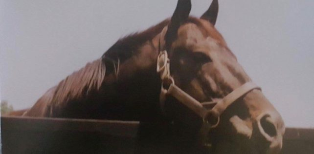 Stallion Stories: Seattle Slew