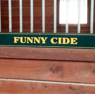 Stallion (Gelding) Stories: Funny Cide