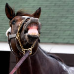 McCraken giggles while getting a bath at Churchill Downs during Kentucky Derby week 2017. Photo: Jordan Sigmon