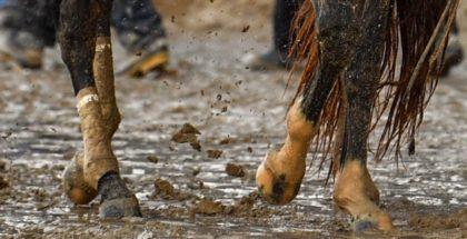 Always Dreaming's muddy feet. Photo: Jordan Sigmon