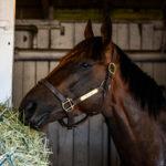 Royal Mo in his stall at Churchill Downs, 5/7/17. Photo: Jordan Sigmon