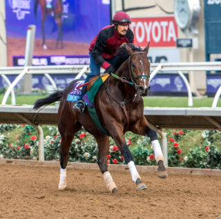 Bolt d'Oro Looks To Cap Perfect Season With Breeders' Cup Win
