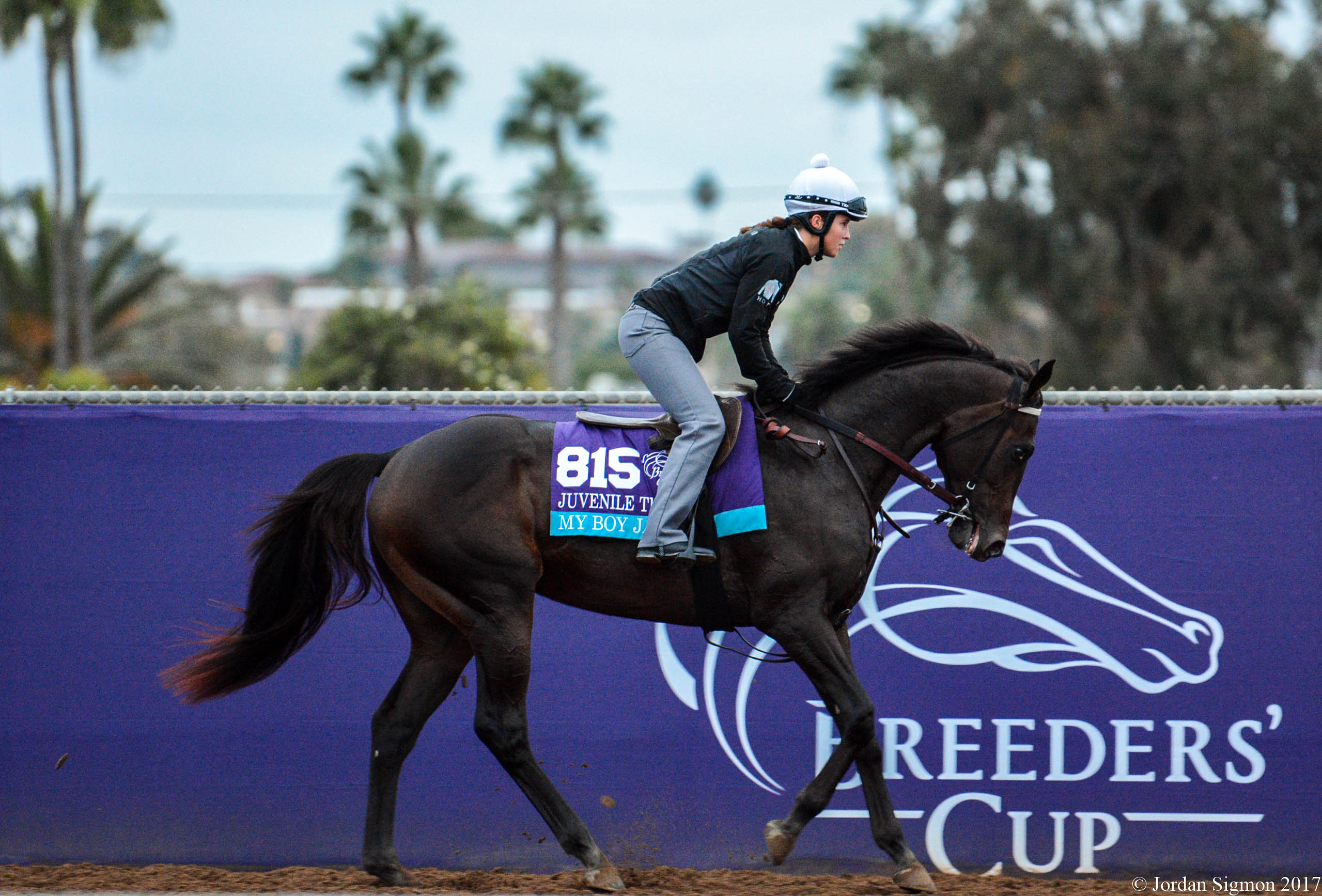 Breeders Cup Morning Training Photos 11 1 17 Lady And