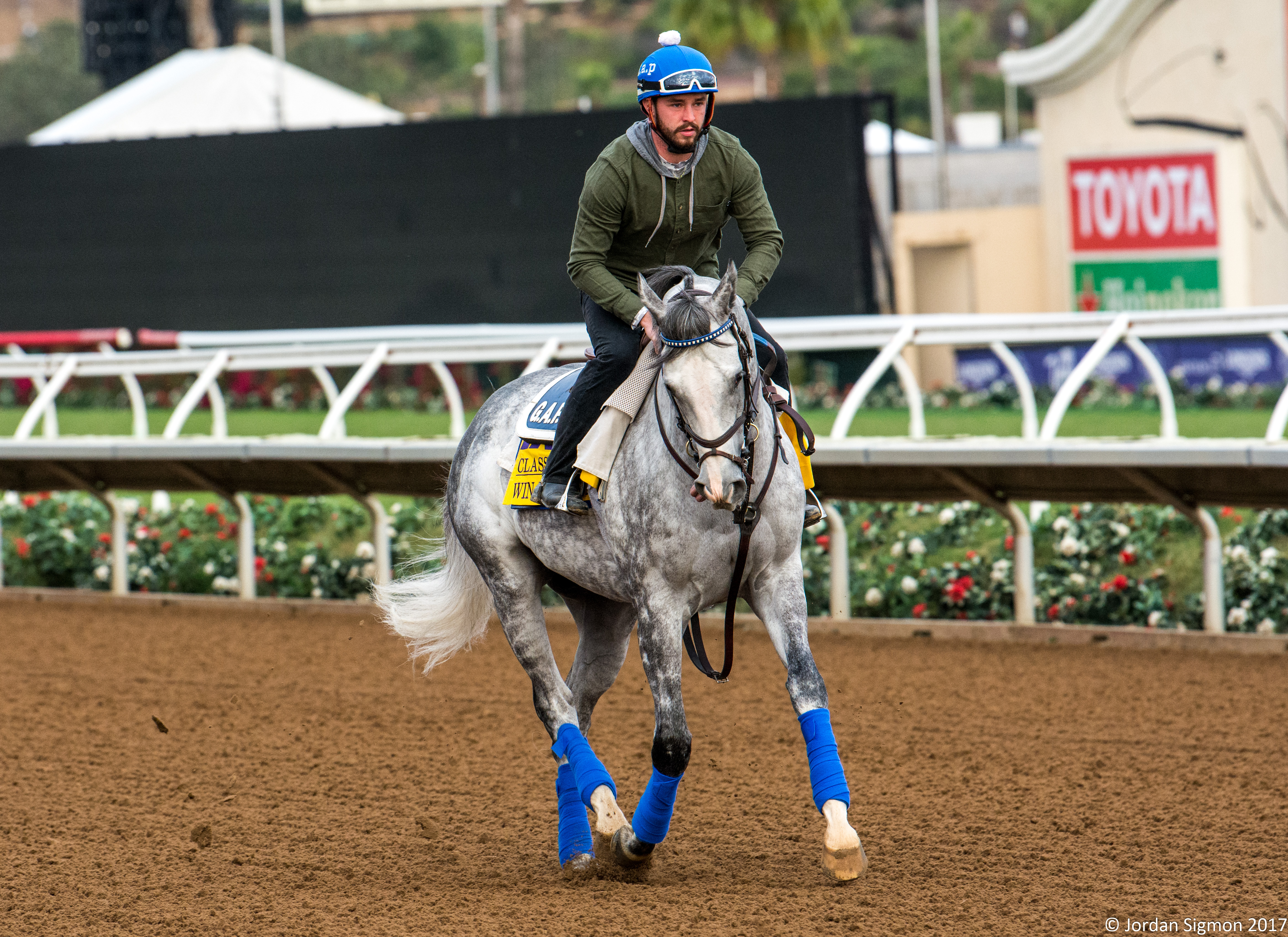 Breeders Cup Morning Training Photos 11 2 17 Lady And