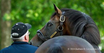 Breeders Cup Classic 2014 Cigar Street Could Spring Upset