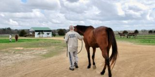 Together, OTTBs And Inmates Find A Better Road
