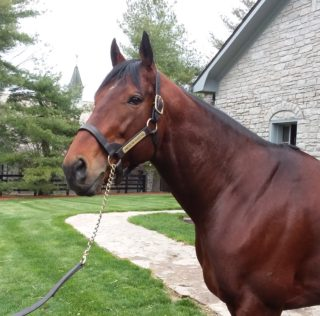 American Pharoah: From A Grand Slam Champ To A Grand Sire In The Making