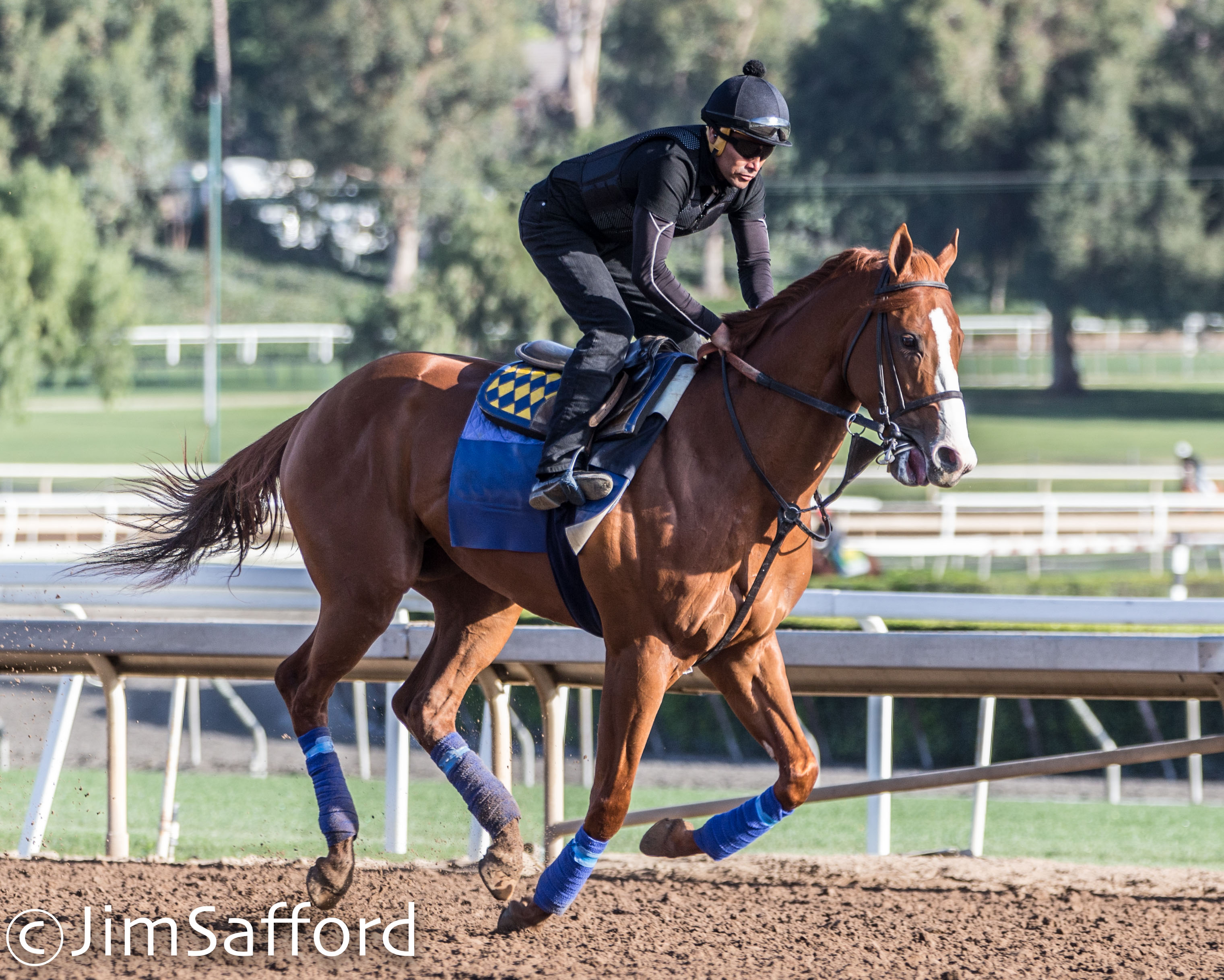 Justify The Evolution Of A Champion Lady And The Track
