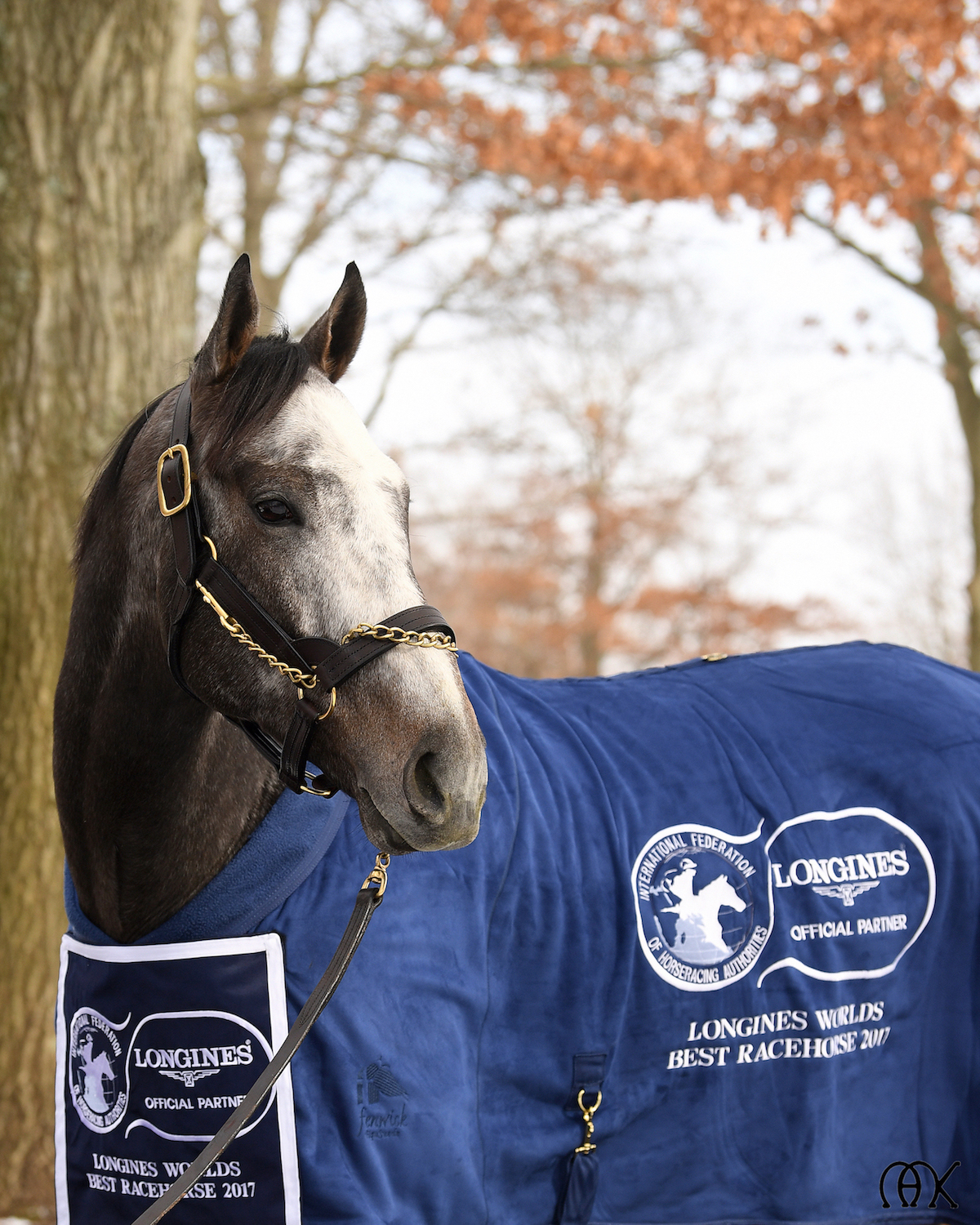 Arrogate S Journey From The Record Books To A New Life As