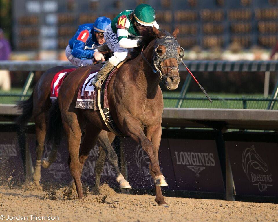 Accelerate Argues Case For Horse Of The Year With Classic