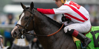 Bricks And Mortar Is 2019's Horse Of The Year