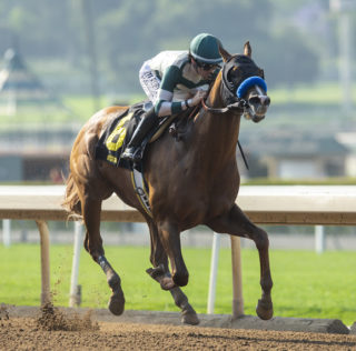 Mucho Gusto Ready For Big Performance In Pegasus World Cup