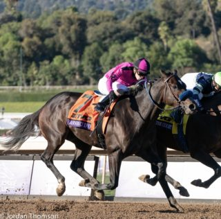 Risen Star Split, Draws Talented Fields For Both Divisions